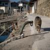 猫の島「青島」に行ってきました(持ち物編)