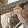 猫の島「青島」に行ってきました(行く前の心構え編)